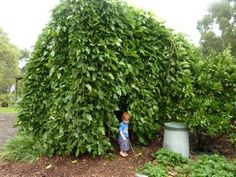 I'd love to get a weeping mulberry tree for our kids to use for their own secret place in the yard.