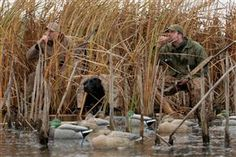 Strategies for Duck Hunting on Public Land