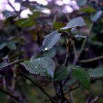 ...y paro de llover. - via @danisa_colombo