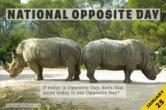 Celebrate National Opposite Day on Jaunuary 25 with this collection of jokes, quotes, captions, fun facts, and FAQs on the celebration day. #opposite #quotes #jokes National Celebration Days, Jokes Quotes, Captions, Quote Of The Day, Fun Facts, Meant To Be, How To Memorize Things, January, Celebrities