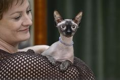 Cats in the news Sphynx, French Bulldog, Cats, Dog, Bulldog Frances, Gatos, Sphynx Cat, Cat, Kitty
