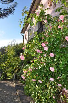 Rosenfront Plants, Rural House, Nice Asses, Flora, Plant, Planting