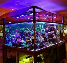 This custom LED has the spectrum to grow massive corals! Read more about this modification! Saltwater Aquarium Setup, Discus Aquarium, Saltwater Fish Tanks, Aquarium Design, Marine Aquarium, Aquarium Fish Tank, Planted Aquarium, Freshwater Aquarium, Aquarium Lighting