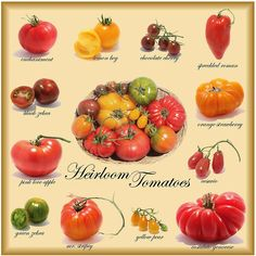 Heirloom Tomatoes - lovely colours