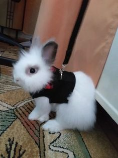 Best Leash, Lead and  Harness for Rabbits!              Rabbit - Collars, Leads Rabbit Facts, Rabbit Breeds, Rabbit Eating, Bunny Care, Cute Animals, Small Animals, House Rabbit, Secret Life Of Pets, Cute Bunny