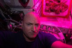 V auguste 2015 sa na Medzinárodnej vesmírnej stanici podarilo astronautom vypestovať rímsky šalát.
