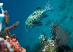 Dive Sites in Amed area Bali Indonesia