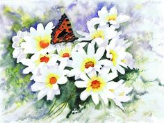 Small Tortoiseshell on daisies - watercolour by Julie Horner