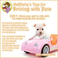 AP-Tips-for-Driving-with-Pets-2
