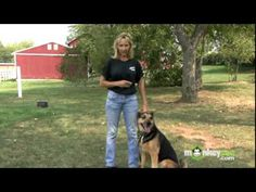 To View the Next Video in this Series Please Click Here: http://www.monkeysee.com/play/2560-dog-training-using-training-aids