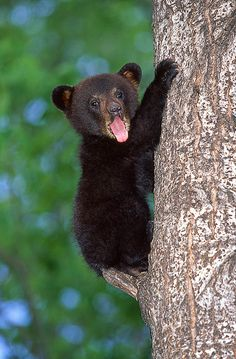Cute Baby Black Bear. | Flickr - Photo Sharing!
