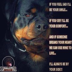 This goes for Rotties and all dogs bc thats what dogs are. Rottweiler will give up their life for you, Rottie's love is a forever love. Loyal and full heartedly Loving Big Dogs, I Love Dogs, Puppy Love, Cute Dogs, Dogs And Puppies, Doggies, Awesome Dogs, Large Dogs, Funny Dogs
