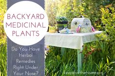 Did you know you could have a plethora of backyard medicinal plants right under your nose? Here's what to look for and how to use these medicinal plants!