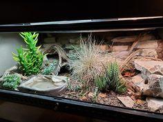Leopard Gecko Setup, Leopard Gecko Cute, Leopard Gecko Habitat, Reptile Habitat, Reptile Room, Reptile Cage, Les Reptiles, Cute Reptiles, Rabbit Cages
