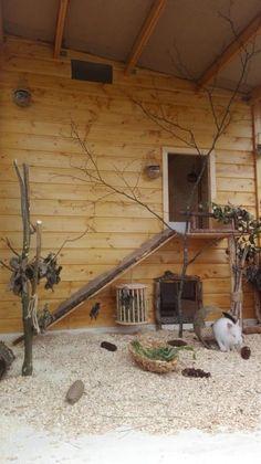 Kleintiere - New Ideas Rabbit Shed, Rabbit Farm, Rabbit Run, House Rabbit, Rabbit Toys, Bunny Rabbit, Lionhead Rabbit, Diy Bunny Cage, Bunny Cages