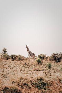 Uganda wildlife.
