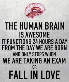 the human brain - Google Search