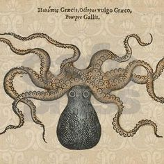 A vintage octopus image, from a wildlife anatomy book published in 1553, this octopi krakken drawing features old-fashioned coloring and decorative background designs. The Kraken octopus is a legendar
