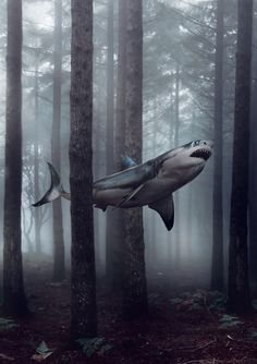 Beware of flying sharks in the fog.  Doctor Who Christmas Special.  A Christmas Carol.