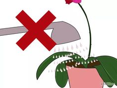 Imagen titulada Care for Phalenopsis Orchids (Moth Orchids) Step 2