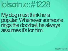Dogs and doorbells