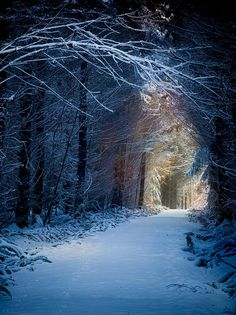 Enchanted Forest, Kitsap County, Washington: djferreira224 | Tumblr