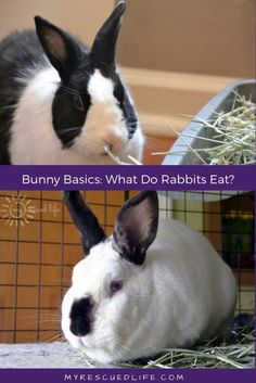 Wondering what to feed your pet rabbit? The main component of your indoor pet rabbits diet should be timothy hay grass hay or a combination of both. Pet bunnies should also eat two salads a day with 2 kinds of greens and a few special toppers. #rabbithouses Rabbit Diet, Rabbit Eating, Pet Rabbit, Cat Brain, Cat In Heat, Indoor Pets, Pet Mice, Pet Health, Pet Adoption