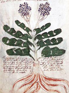 Dan Wilson: The Voynich Manuscript - An Acoustic Interpretation
