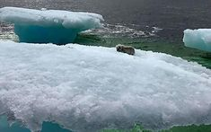 [Pics] Fishermen Discover Something Unusual Sitting on a Lone Iceberg. When They Got Closer, They Were Horrified
