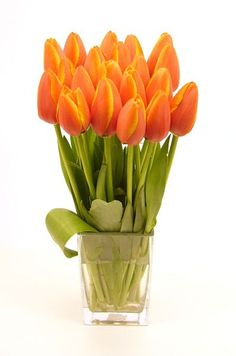 Tulips my absolute favorite flower !