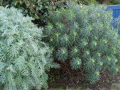 Beautiful Gardens, Herbs, Design, Decoration, Garden, Plants, Small Garden Plans, Small Front Gardens, Evergreen Shrubs
