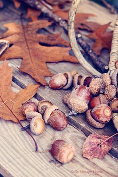 Acorns | Flickr - Photo Sharing!
