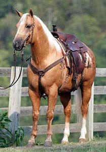 Palomino Quarter Horse