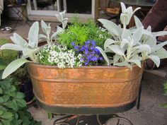 Copper garage sale pot filled with some annuals and some perennials from my yard. Pot on a budget! #ContainerGardening