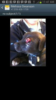URGENT~THIS BOY ATTACKED BY A FULL GROWN HUSKY & THEN DROPPED AT A SHELTER. HIS EYES HAVE POPPED OUT & JAW BROKEN. SNARR WILL TAKE HIM BUT HE COULD REALLY USE HELP-HE'S CURRENTLY IN EMERGENCY SURGERY.  DONATE:http://snarranimalrescue.org/home.html or via Paypal using email: mailto:SNARR_1@YA... at www.paypal.com/ www.facebook.com/... I just made my donation. PLEASE GIVE WHATEVER YOU CAN FOR THIS PRECIOUS PUP.