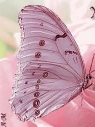 pink butterfly wings-So pretty in pink! Art Papillon, Papillon Butterfly, Papillon Rose, Butterfly Kisses, Pink Butterfly, Butterfly Wings, Butterfly Photos, Butterfly Bedroom, Butterfly Mobile