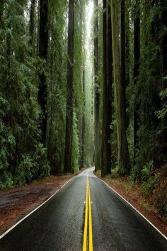 Avenue of the Giants, Humboldt Redwoods State Park, California, USA