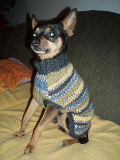 Koiran villapaita Talitintti