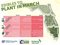 Gardening Solutions Infographics - Gardening Solutions - University of Florida, Institute of Food and Agricultural Sciences - Edibles to plant in March graphic -