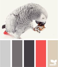feathered tones parrot berries color palette. white, greys, black, soft, light, salmon, orange pink, cream hues