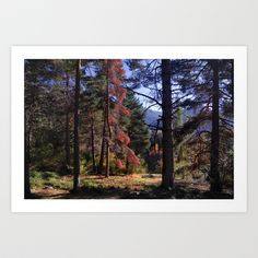 Autumn forest Art Print by Guido Montañés - $20.00