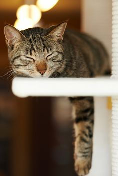 . by rampx on Flickr.catnap
