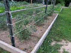 Garden Desk ~ How to stake a tomato plant, compost facts, beneficial insects and so much more!