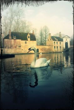Bruges: went there four years ago and it's one of my fondest memories
