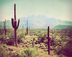 Southwest Photograph Wild West Fine Art Photography Arizona vintage colors green cactus mountains desert landscape nature travel photo. $ 28.00, via Etsy.