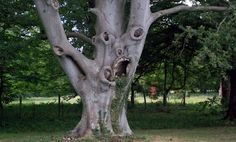 scary tree weird tree funny plant images pictures bajiroo photo gallery 1 Most Funny Trees on Earth You Never Seen Before Pictures) Weird Trees, Tree Faces, Image Nature, Nature Photos, Old Trees, Unique Trees, Nature Tree, Weird And Wonderful, Tree Art
