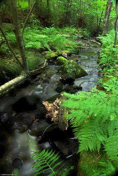 A lovely little stream.