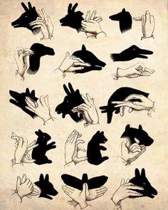手でつくる影絵の動物15種類