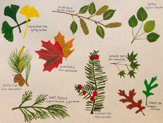 Tree bits. Gouache illustration by Tina Jett