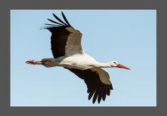 Wildlife, Bird, Animals, Animales, Animaux, Birds, Animal Memes, Animal, Animais